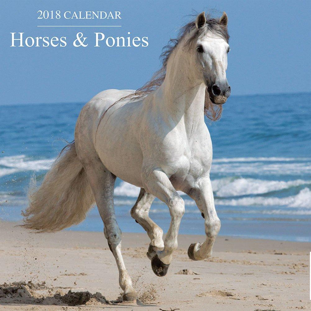 2018 Calendar Horses /& Ponies