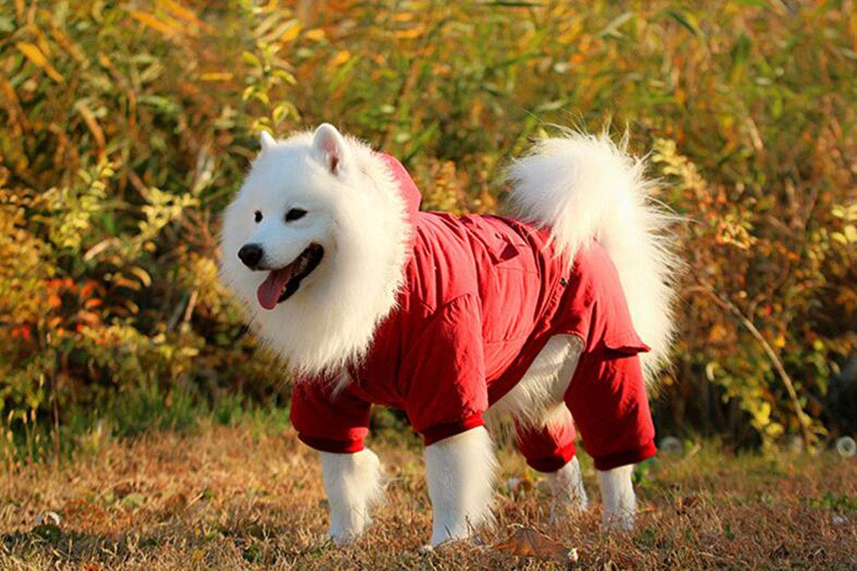 Red 3XL Red 3XL Big Dog Autumn and Winter Clothing, Large and Medium Dogs, Hooded Cotton Clothes (color   Red, Size   3XL)