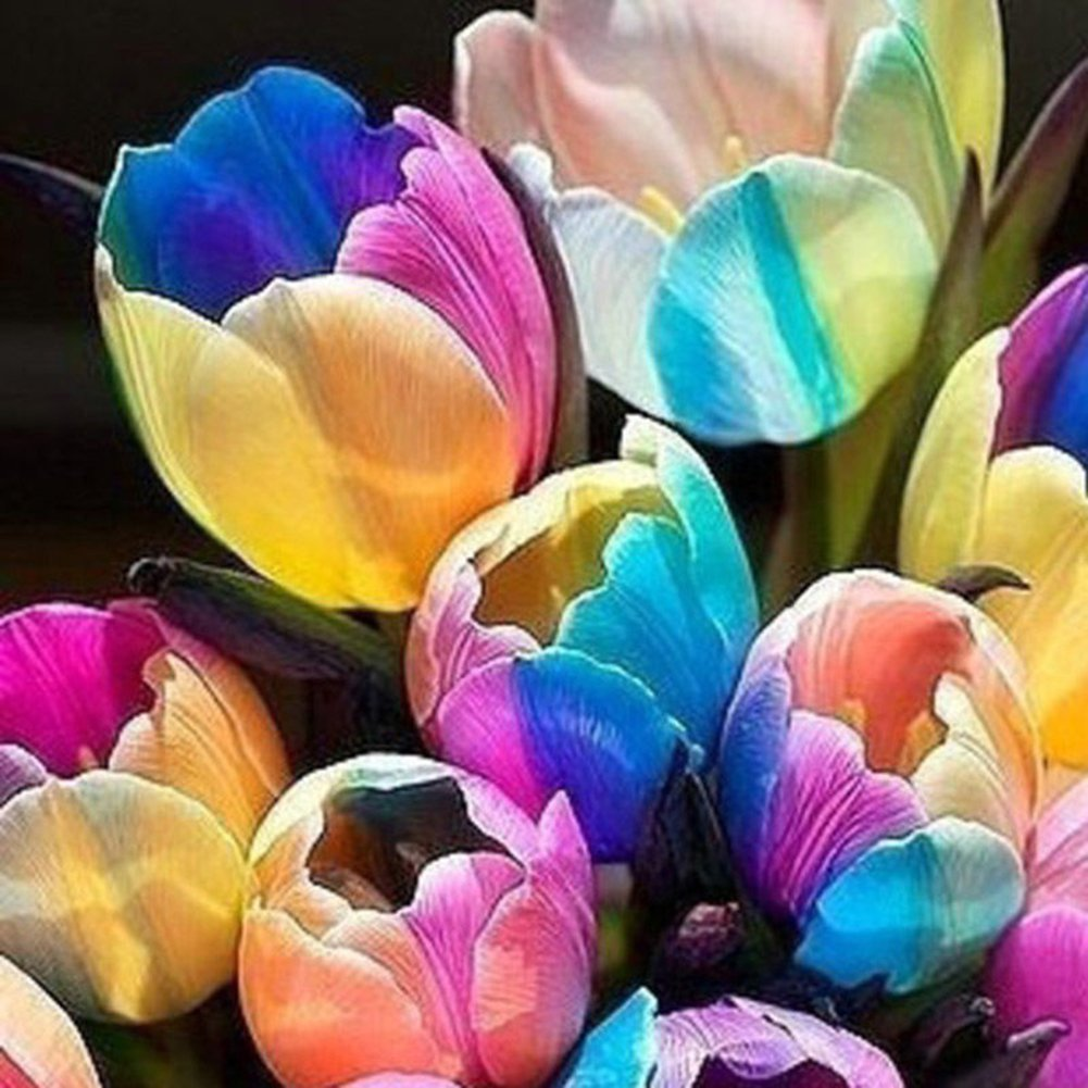 XKSIKjians Garden 5 Pcs Rare Rainbow Tulip Bulbs Seeds Ornamental Plant Home Yard Office Decor Non-GMO Seeds Open Pollinated Seeds for Planting
