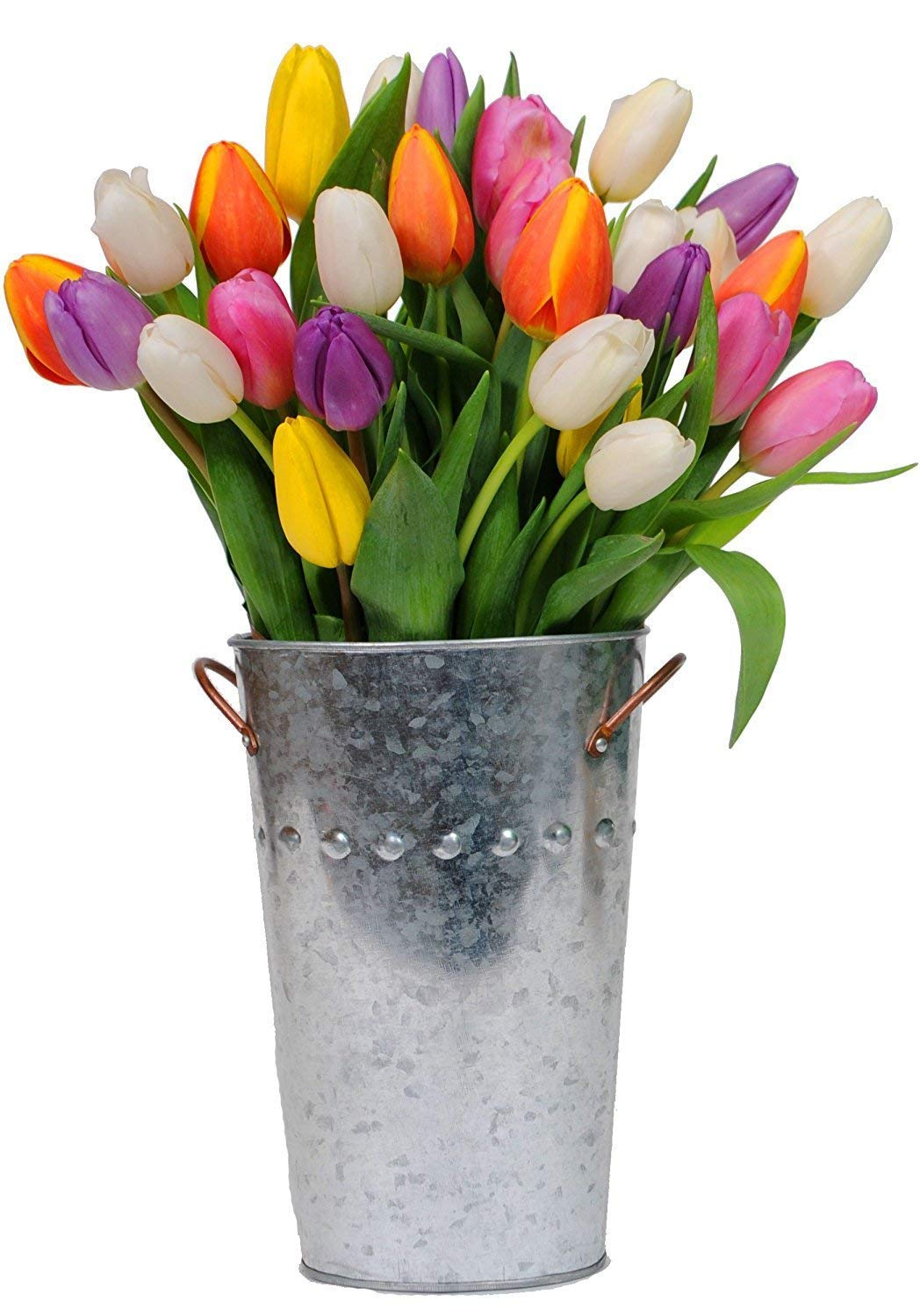 Stargazer Barn - Firework Bouquet - 30 Assorted Color Tulips with French Bucket Style Vase - Farm Fresh by Stargazer Barn