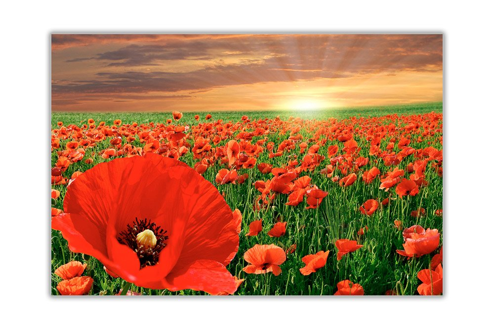 Blooming Poppy Field Poster Art Prints Wall Decoration Floral Pictures