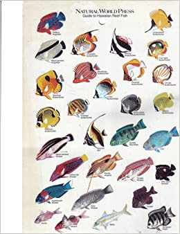 Guide To Hawaiian Reef Fish Unknown Books