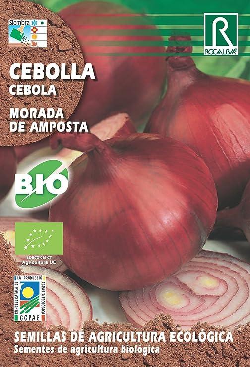 Semillas ECOLOGICAS Cebolla Morada de Amposta: Amazon.es: Jardín