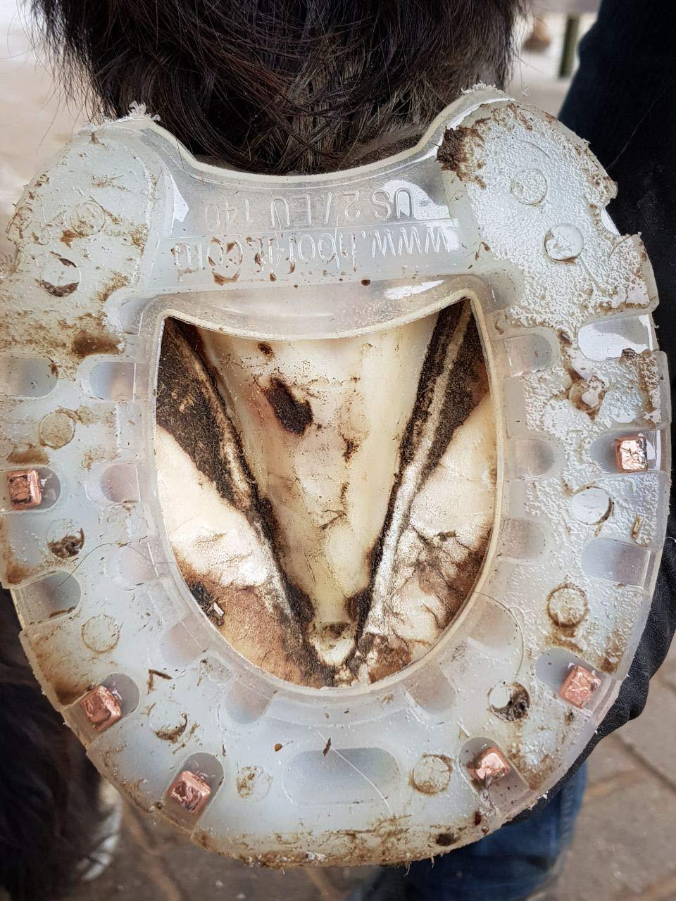 HOOF-IT Plastic Horseshoes - Natural Flex Horseshoe US Size 8-12 by HOOF-IT