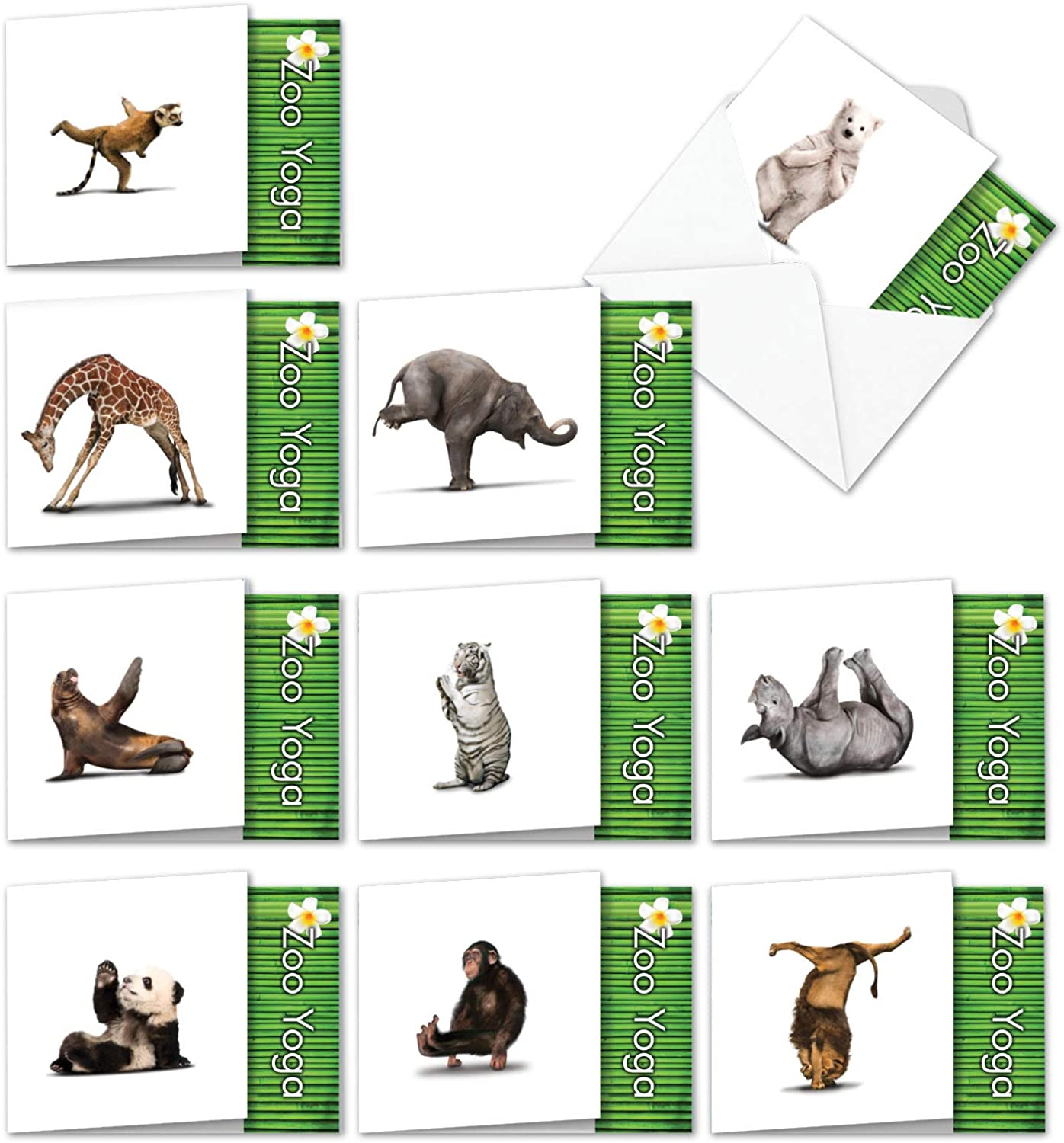 10 Humorous Zoo Yoga All-Occasion Assortment Note Cards w/Envelopes (4.8 x 6.6 Inch) - Blank Greeting Notecards with Funny Zen Bear, Lion, Monkey - ...