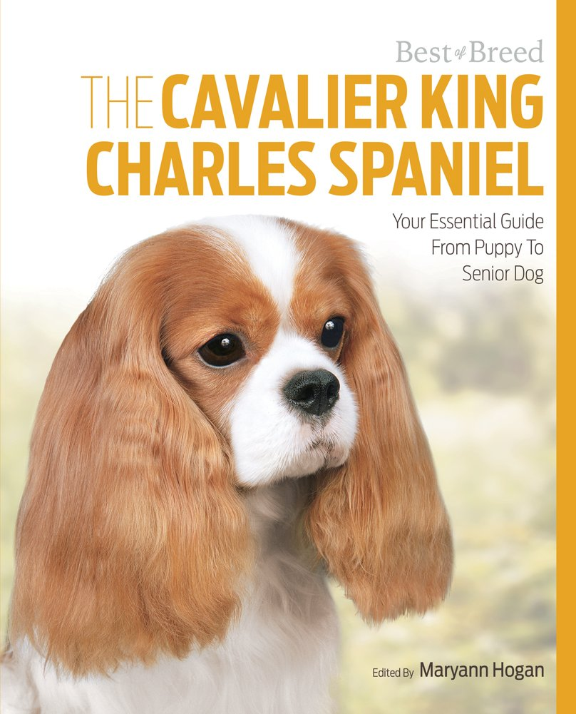 The cavalier king charles your essential guide from puppy to the cavalier king charles your essential guide from puppy to senior dog best of breed maryann hogan 9781910488041 amazon books nvjuhfo Image collections