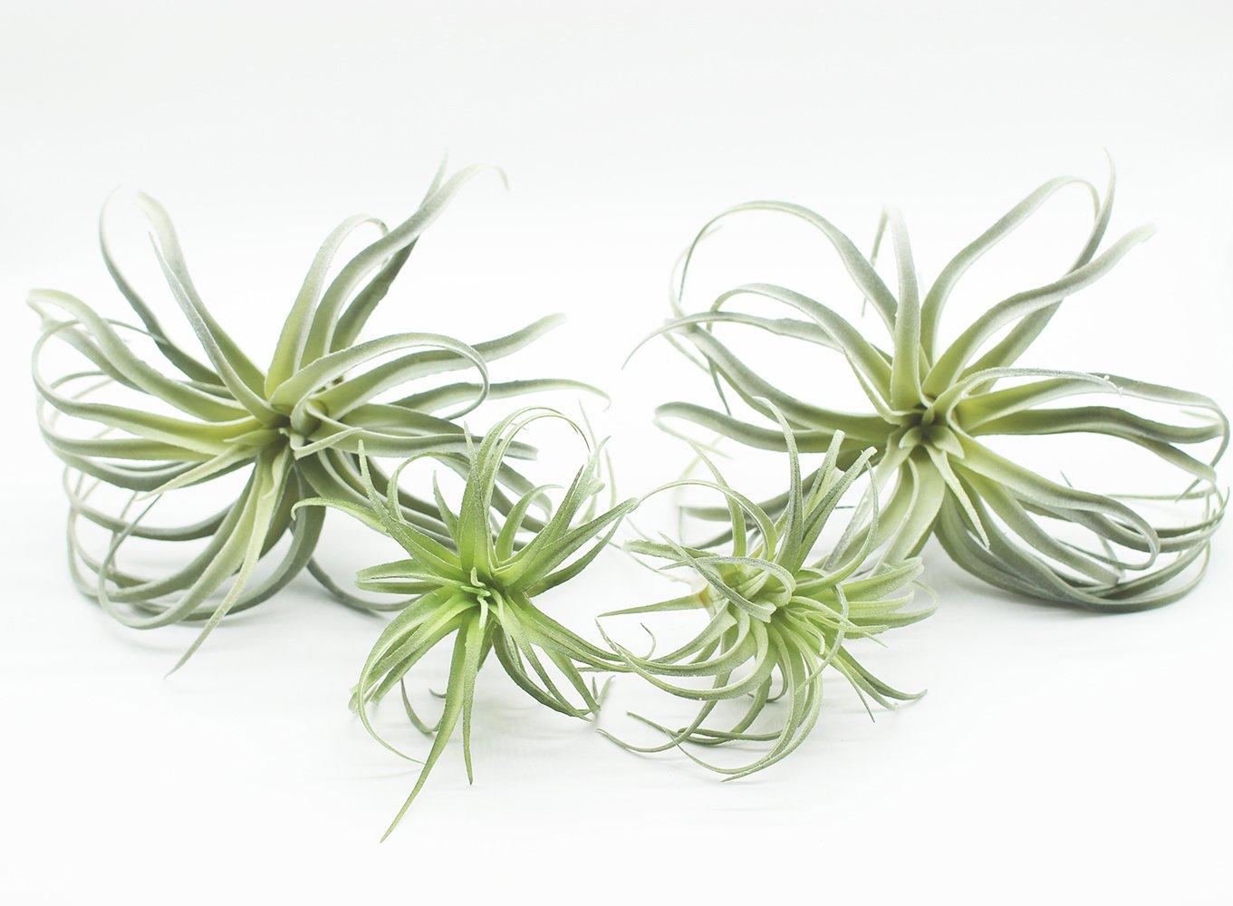 Yokoke人工パイナップルGrass空気植物フェイク花フェイク多肉植物Flocking Tillandsia Bromeliadsホームガーデン装飾4個11 cm Assortment B07BK4YSNY