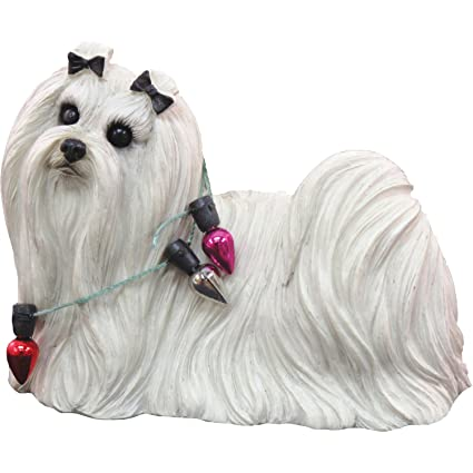 Amazon.com: Sandicast Maltese Wearing Holiday Lights Christmas ...
