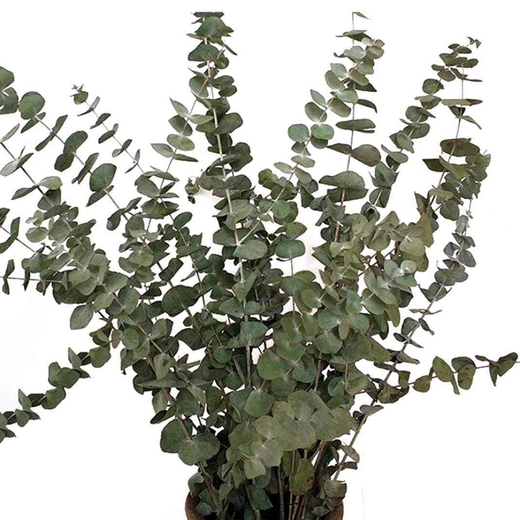 L zzJiaCzs Artificial Eucalyptus Leaf,10Pcs//Bouquet Dried Natural Eucalyptus Branches Leaves Flower Arrangement Decor