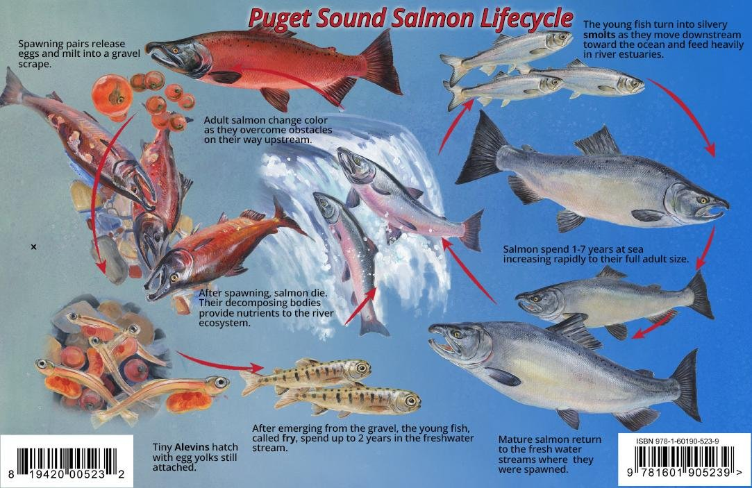 Puget Sound Salmon Life Cycle Guide Card ebook