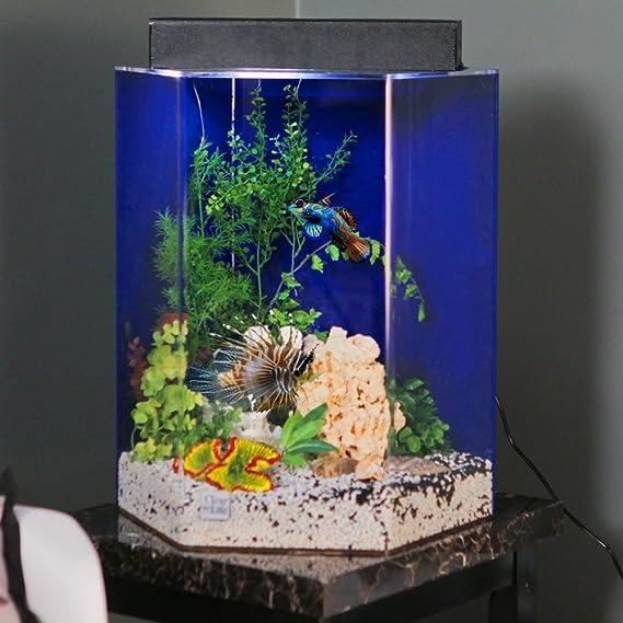 Amazon com : Clear-For-Life 95 Hexagon Aquarium - Clear Back