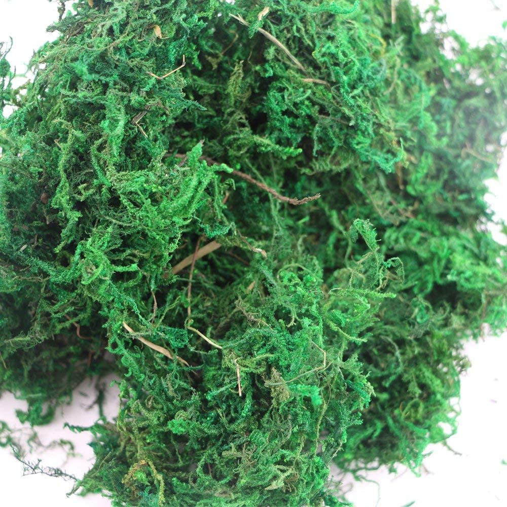 MODEL MAKING FLORIST DRIED Moss 100 G Forest Moss Green Untreated *