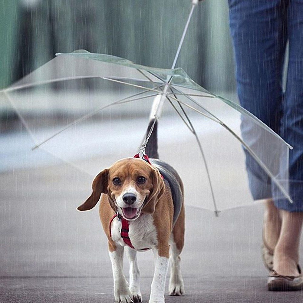 OMEM Paraguas de perro con correa para mascotas al aire libre a prueba de lluvia, diámetro 77 cm: Amazon.es: Productos para mascotas