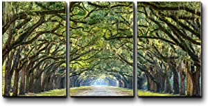 wall26 - Three Piece Canvas - Path Under an Arc of Trees with Leaves Dangling from The Branches on 3 Panels - Canvas Art Home Art - 24x36 inches