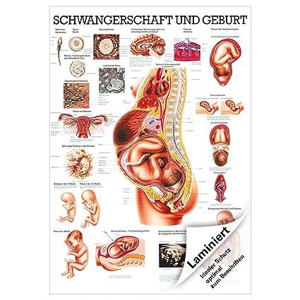 Schön Schwangerschaft Anatomie Scan Fotos - Anatomie Von ...