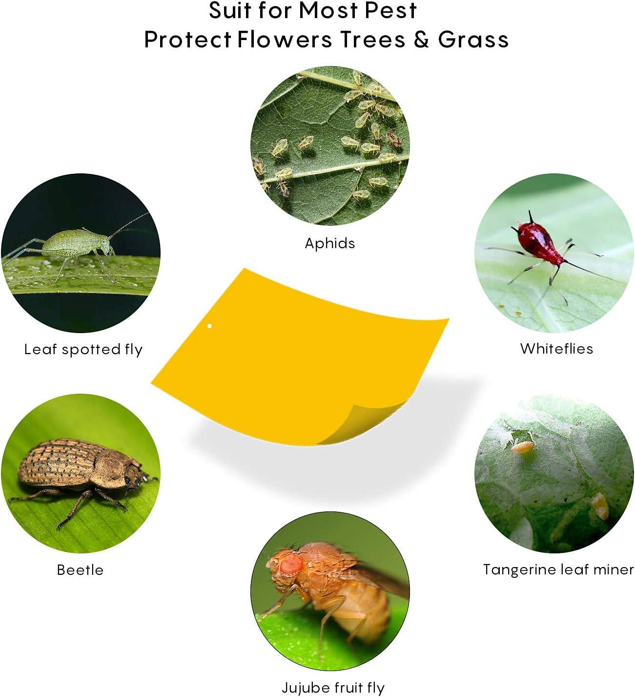 HellDoler Trampas de Insectos de Doble Cara,50 Piezas Trampas Pegajosas Papeles Pegajosos Amarillos Trampas de Moscas para Moscas, Pulgones, Mineros de Hojas, Polillas,15x20cm (50PCS): Amazon.es: Jardín