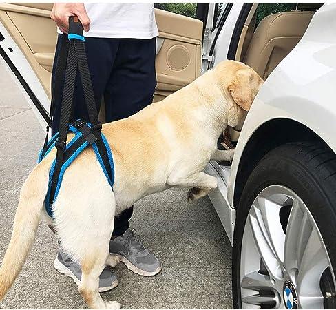 PESUHOUH Perro Caminando Levantando Llevar, Mascota Perro Llevando ...