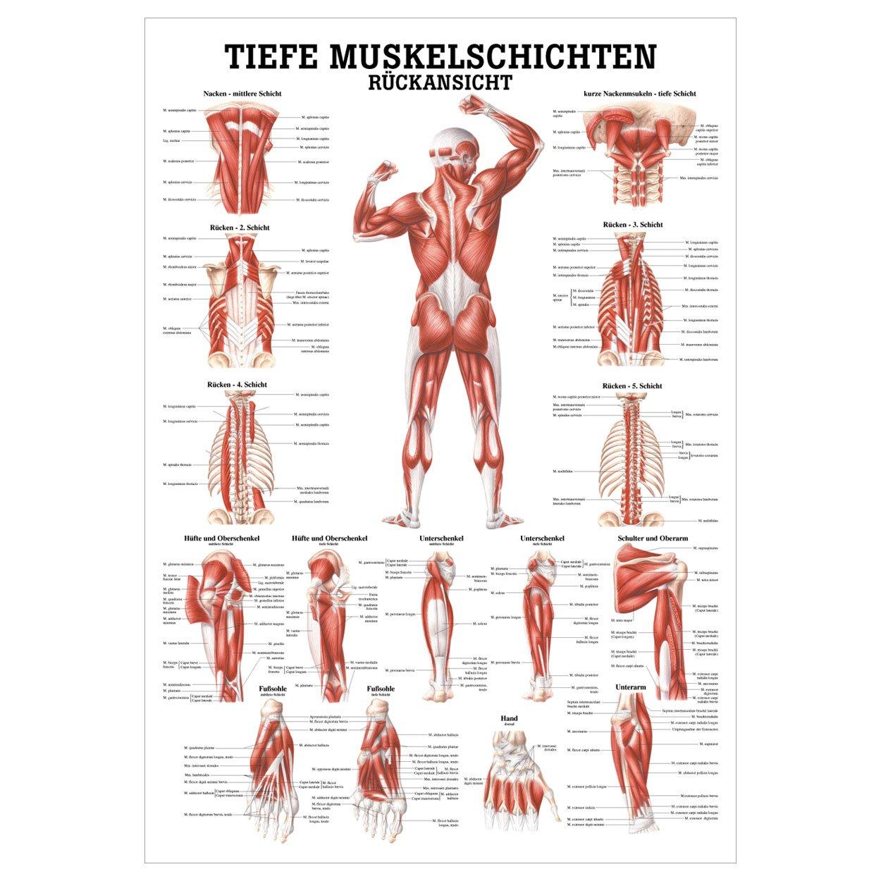Ausgezeichnet Makroskopische Anatomie Fragen Ideen - Menschliche ...