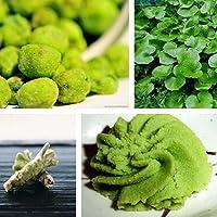 Wasabi Seeds, 100 semillas de wasabi, rábano picante