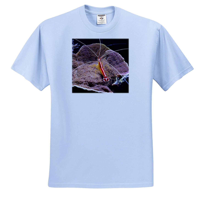 T-Shirts Cleaner Shrimp red Animal Aquarium 3dRose Susans Zoo Crew Animal