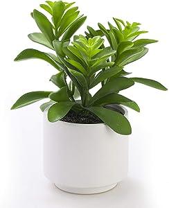 Artificial Plant in Ceramic Pot, Fake Succulent Plant for Home Decor, Faux Plant, 8.75