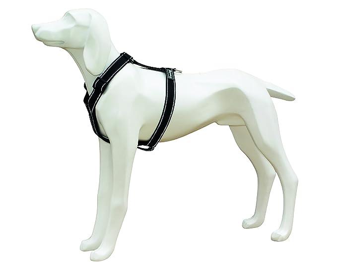 Klettergurt Hund : Freedog fd klettergurt reflektierende nylon für hund