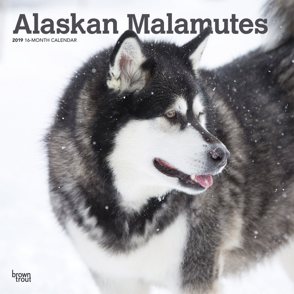 Alaskan Malamutes 2019 12 x 12 Inch Monthly Square Wall Calendar, Animals Dog Breeds (English, French and Spanish Edition) pdf epub