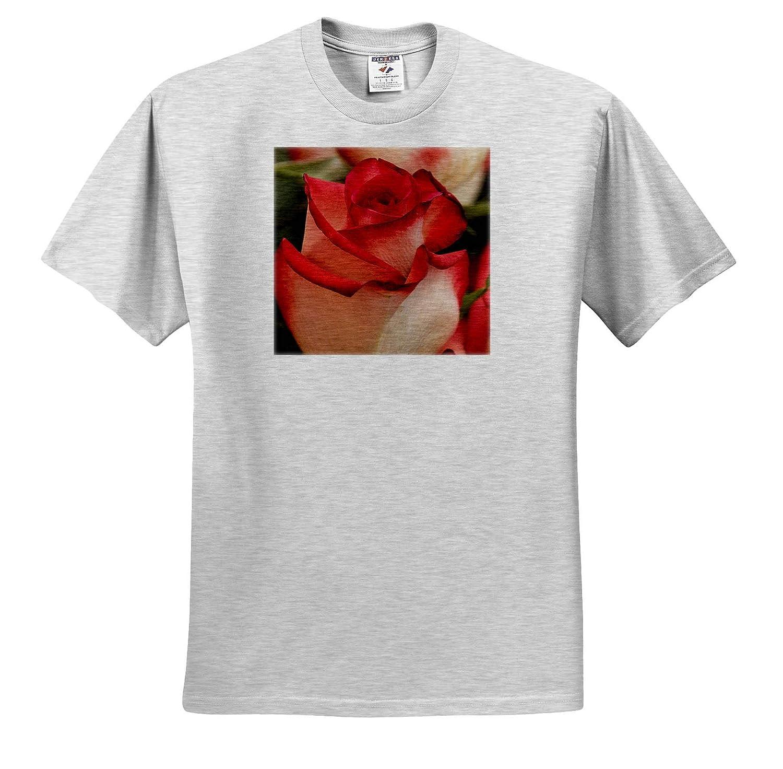 Close-up of Rose ts/_313922 3dRose Danita Delimont - Adult T-Shirt XL Flowers