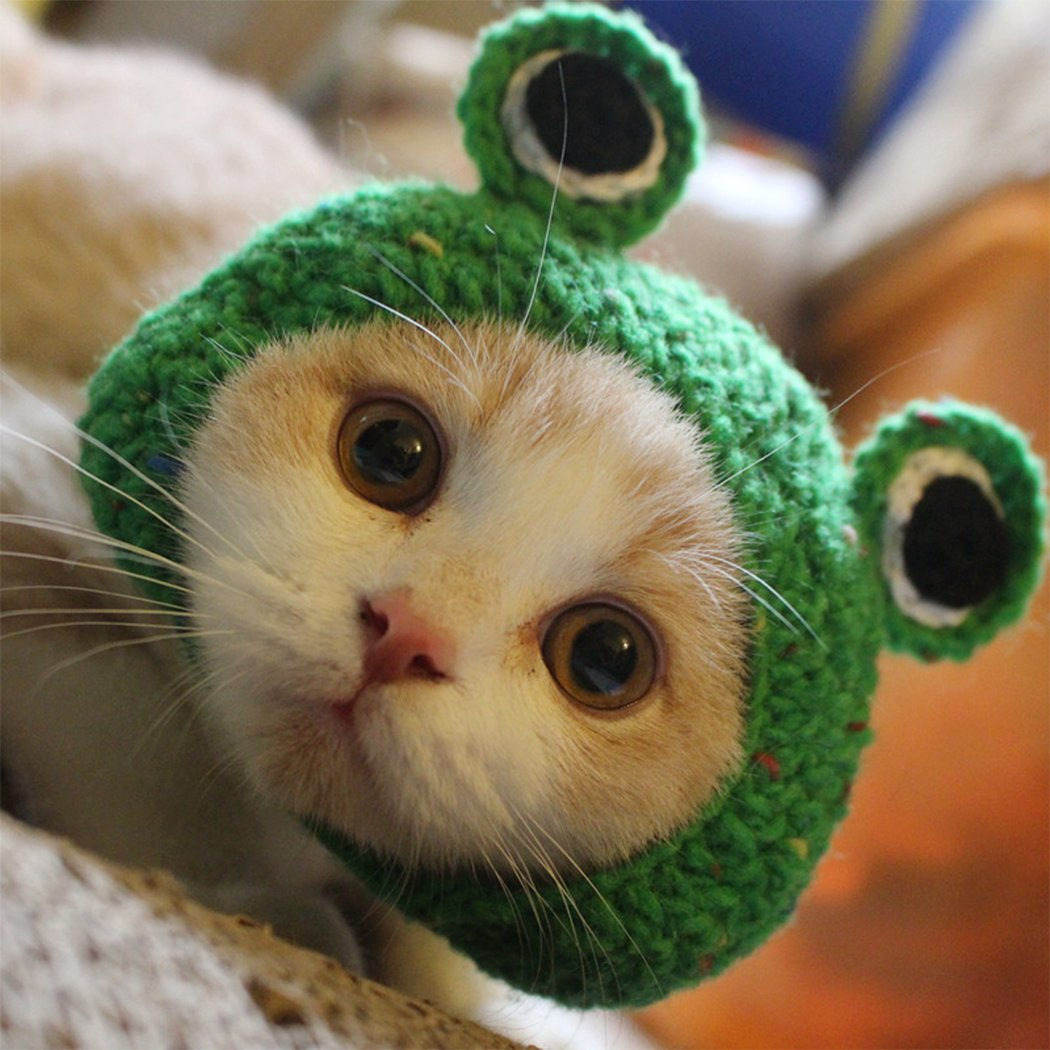 Pet Hat - Dog Cat Pet Cap Handmade Knitted Woolen Yarn Hat for Puppy Teddy Cartoon Frog Animal Dog Cat Grooming Accessories Apparels, Green, M