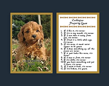 Cockapoo Gesetze Lustig Hund Spruch Geschenk Amazonde Küche