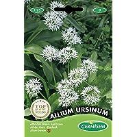 Germisem Allium Ursinum Semillas de Ajo Silvestre 0.7 g, EC1125