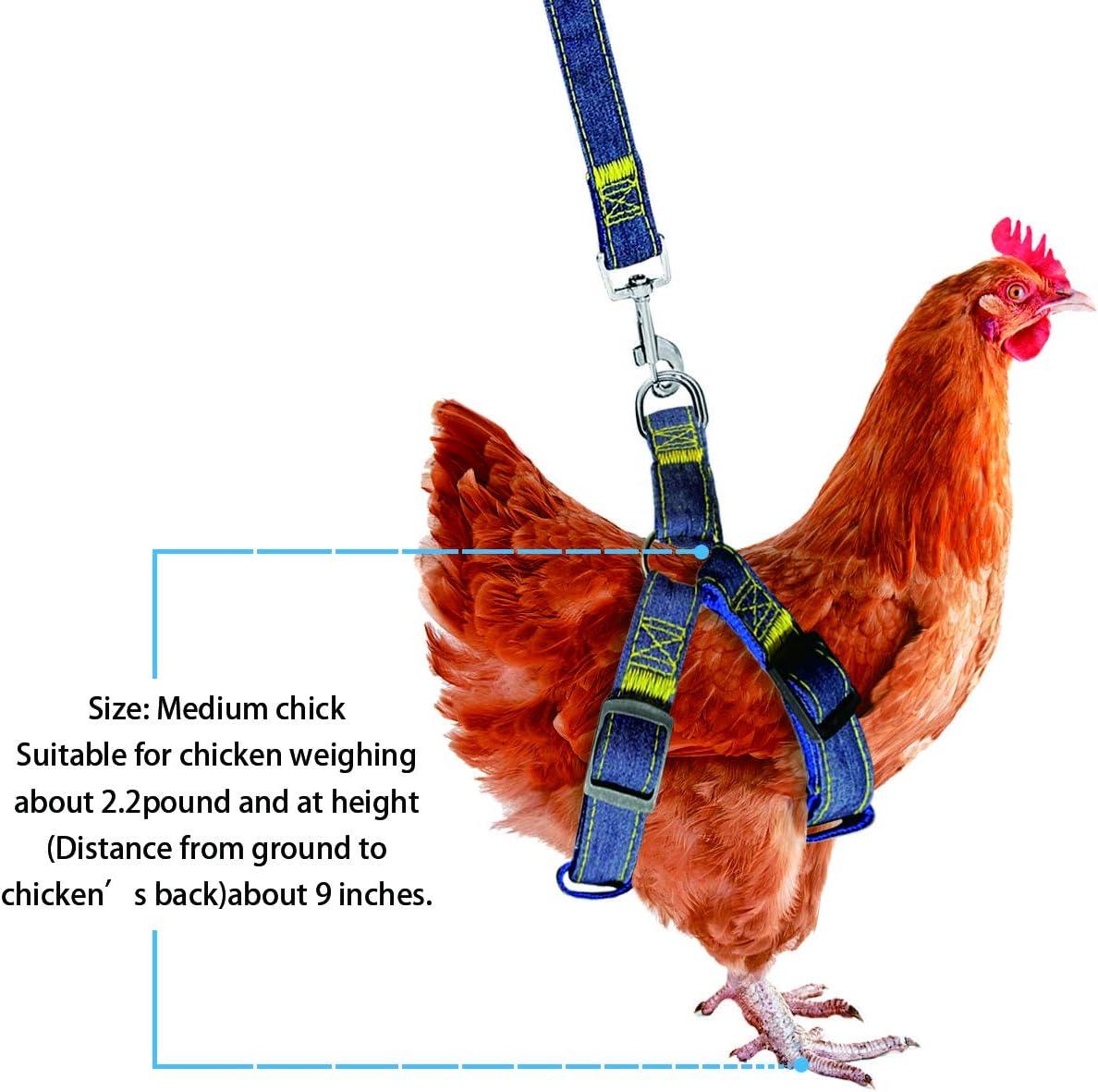 Safe Adjustable Size Comfortable GABraden Chicken Harness Hen Training Belt Traction Chicken Belt Suitable for All Kinds of hens