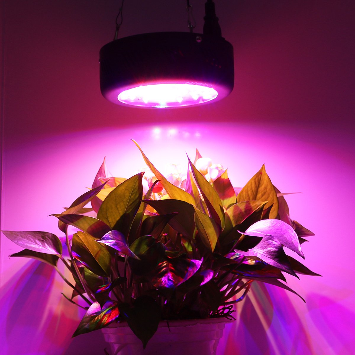 KINGBO New UFO LED Grow Light 150W Full Spectrum LED Plant Light with CREE COB UV IR LEDs and Switch for Indoor Greenhouse Hydroponic Plants Seeding Growing and Flowering KINGBO LED