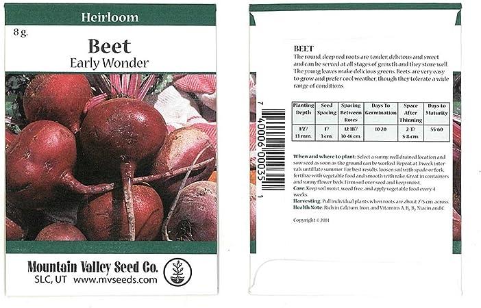 55 Days Maturity EARLY WONDER 50+ Seeds Tender Roots Beet Seeds