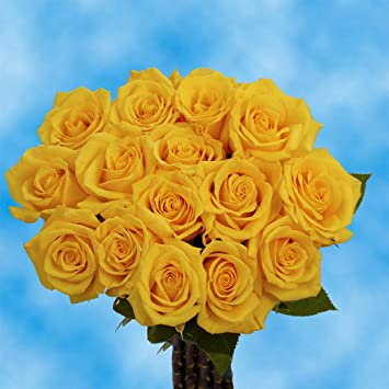 Amazon globalrose 50 fresh cut golden yellow roses gold star globalrose 50 fresh cut golden yellow roses gold star roses fresh flowers for birthdays mightylinksfo