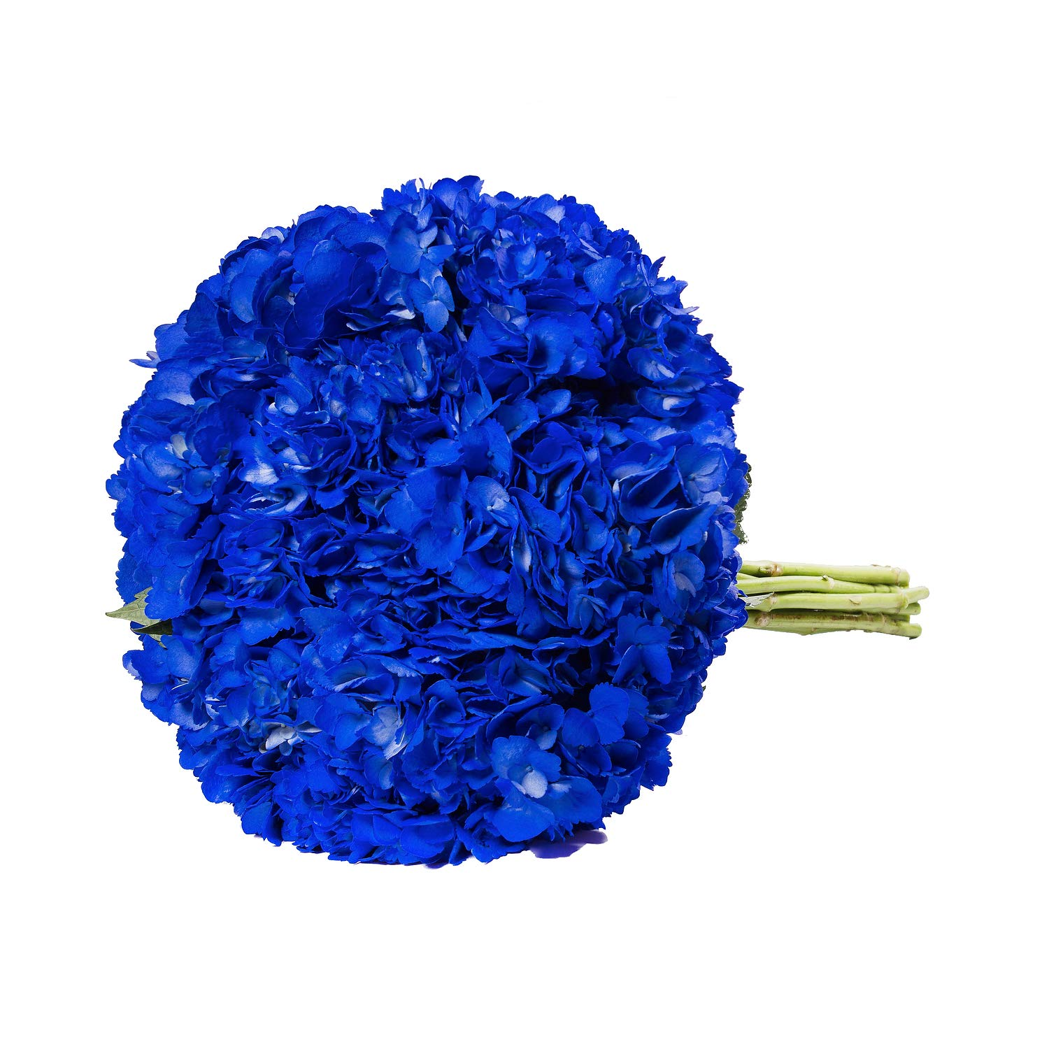 Farm Fresh Natural Painted Dark Blue Hydrangea - Pack 15 by Bloomingmore (Image #3)