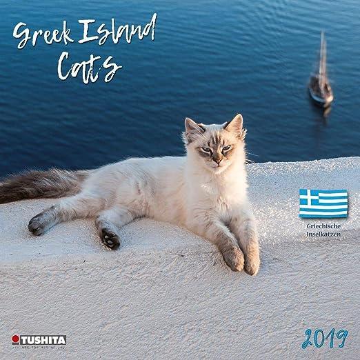 Calendario de pared con diseño de gatos griegos de la isla 2019: Amazon.es: Oficina y papelería
