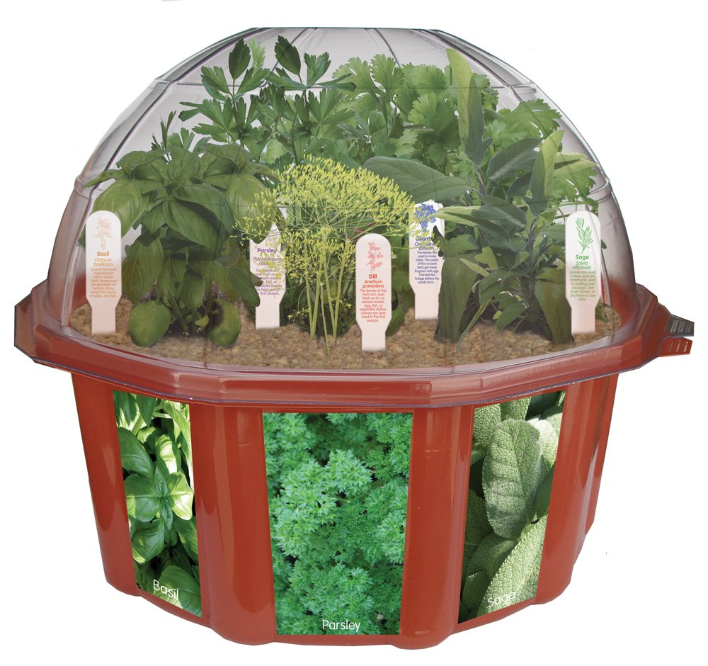 Herb Kitchen Garden Kit Amazoncom Dunecraft Dome Terrariums Herbs Toys Games