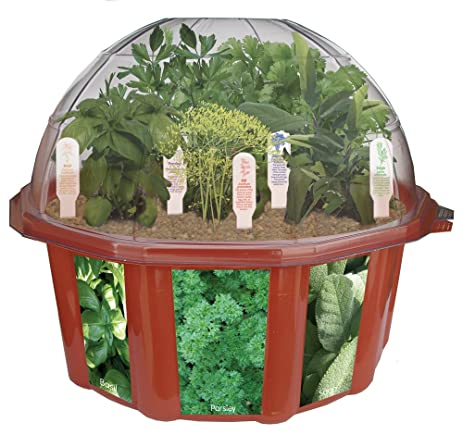 Perfect DuneCraft Dome Terrariums   Herbs