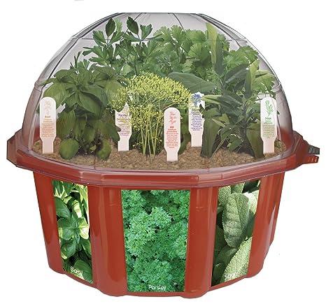 Merveilleux DuneCraft Dome Terrariums   Herbs