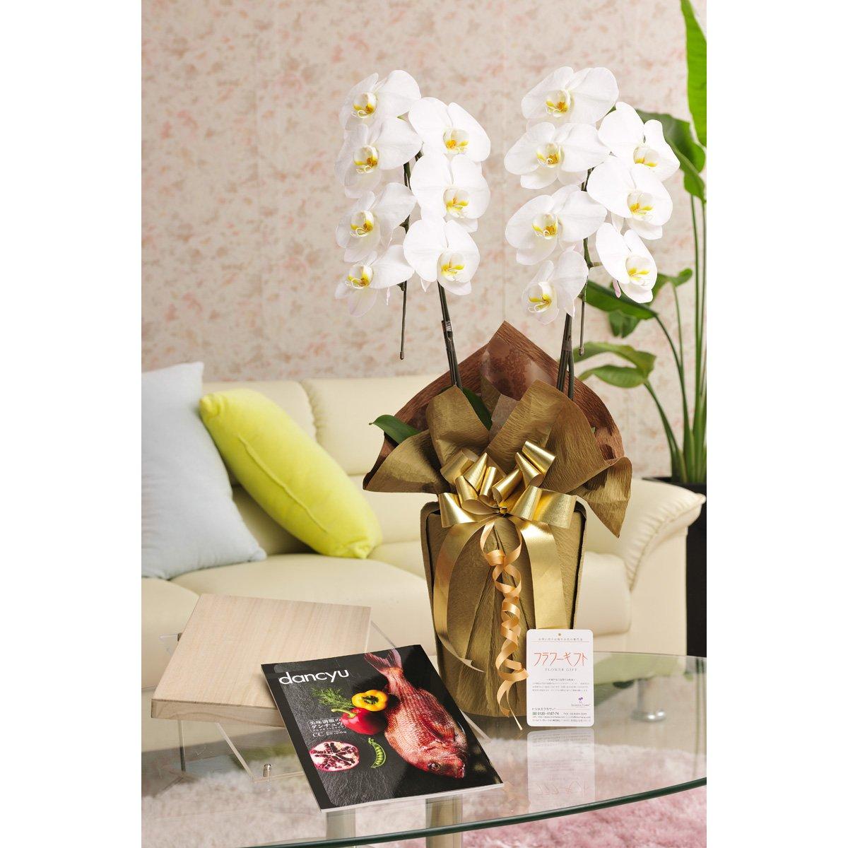 花とギフトのセット 胡蝶蘭 大輪2本立とこだわりの食材カタログギフト(ダンチュウ/CC) B07DTG43FN