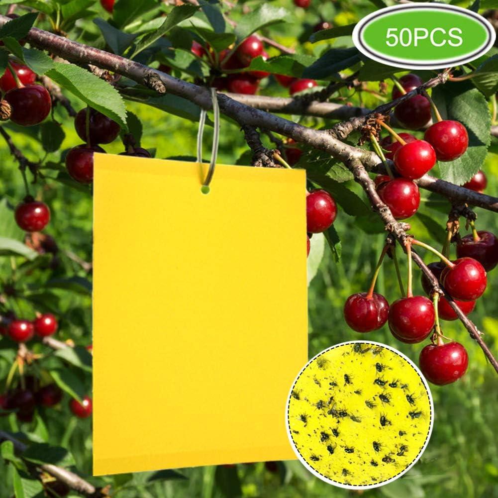ZOORE 50 Piezas de atrapamoscas para Plantas, Eco de Doble Cara Amarillo para múltiples Insectos voladores – Invernadero Volando, áfidos, Hongos, mineros de Hojas y Moscas Blancas (6 x 8 Pulgadas)