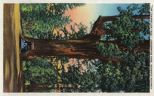 Amazon.com: The Chandelier Tree, Underwood Park, Redwood Highway ...