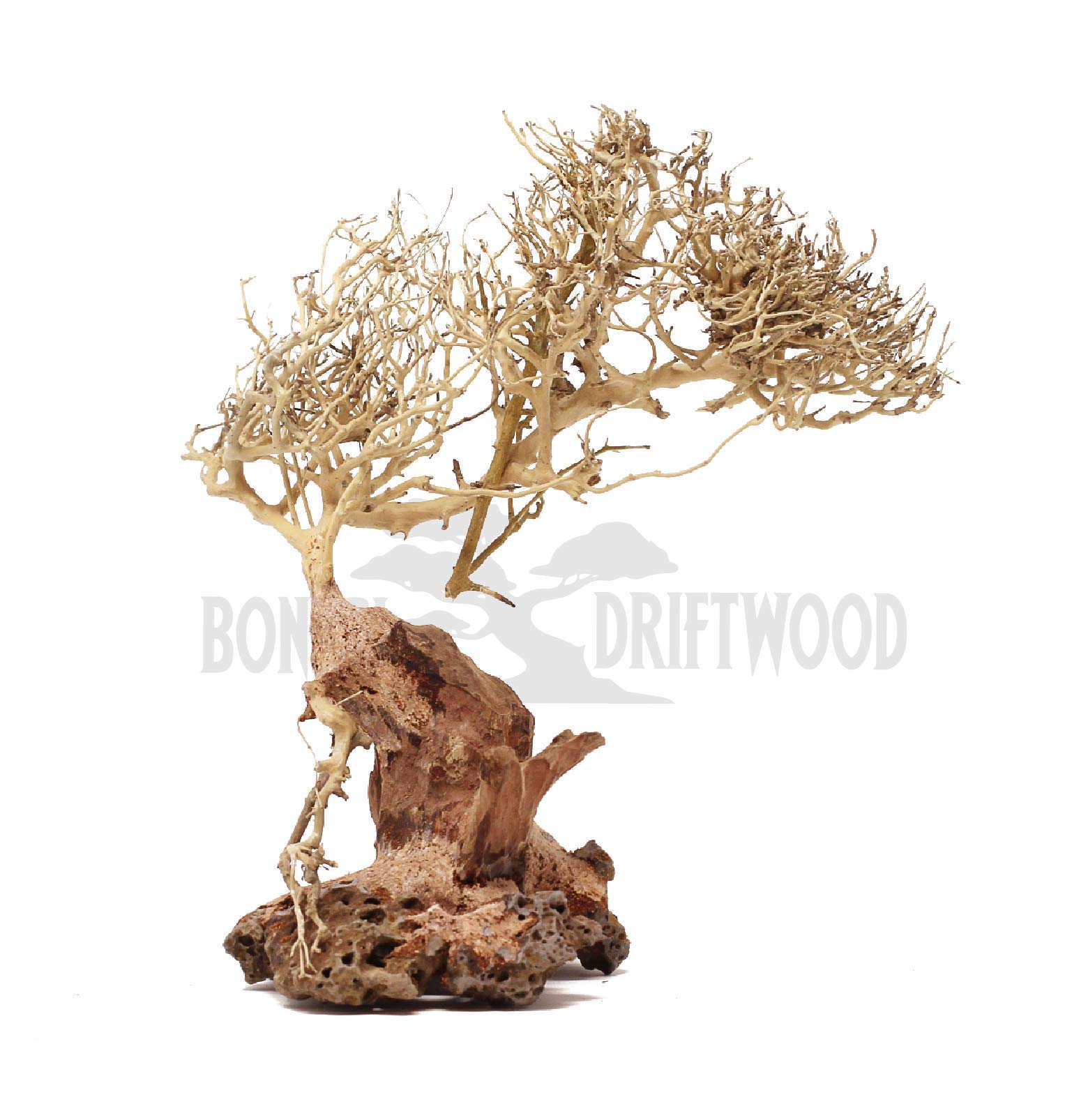 Bonsai Driftwood Aquarium Tree (10 Inch) Natural, Handcrafted Fish Tank Decoration | Helps Balance Water pH Levels, Stabilizes Environments | Easy to Install | BE by Bonsai Driftwood