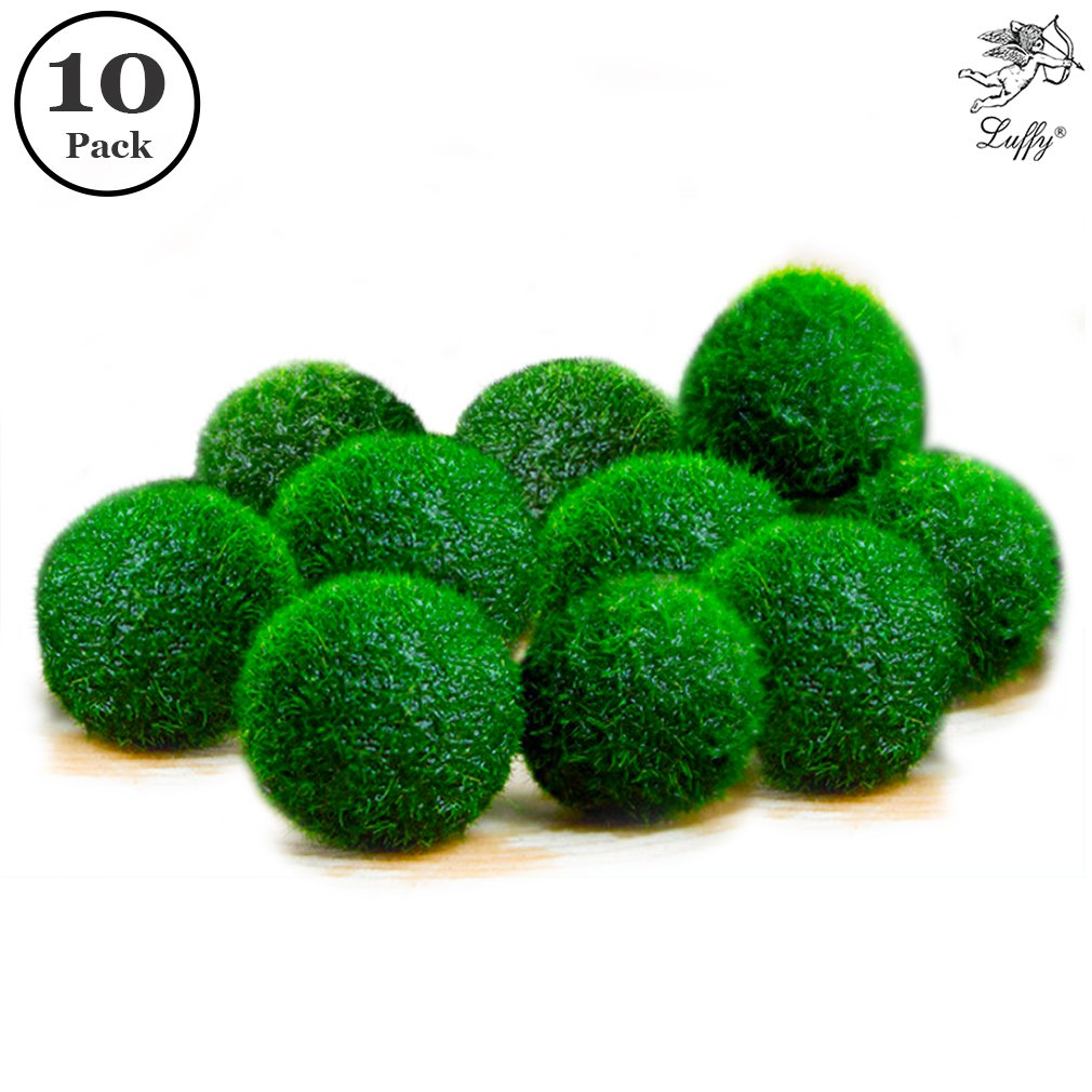 "10 Nano Marimo Moss Balls by Luffy - Naturally Round and Vibrant Green 0.6"" Living Aquatic Plants - Long lasting and Easy to Care for - Perfect as a First Pet or DIY Home Decoration"