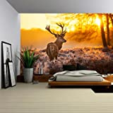 Wall26   Red Deer In Morning Sun   Removable Wall Mural | Self Adhesive  Large Part 57