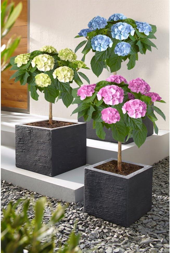 Anthracite Slate Effect Dehner Palermo Plant Cube Plastic