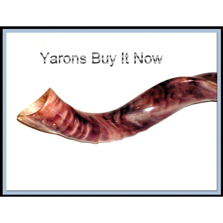 Neue 76, 2 cm Jemenit Shofar Kudu Horn Polished koscher Musik shofars for sale