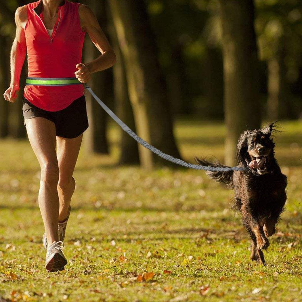 Cadrim Correa para Perro, Correa Doble, Fabricada,Ideal como Correa de Perro para Correr, Bicicleta, Deporte, Running (Gris): Amazon.es: Productos para mascotas