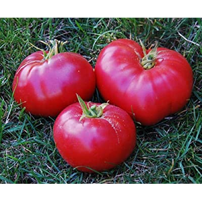 Mexico Tomato Seeds - very sweet, meaty, juicy, and flavorful. !!!(10 - Seeds) : Garden & Outdoor
